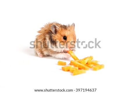 beautiful fluffy hamster sitting and eating - stock photo
