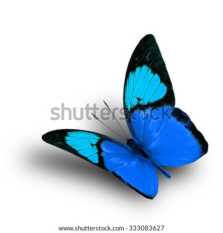 Beautiful flying blue butterfly on white background with shadow beneath, exotic butterfly - stock photo