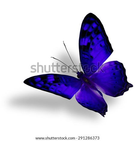 Beautiful flying blue butterfly, The Vagrant Butterfly stretches its back wings profile in fancy color isolated on white bacground with soft shadow beneath - stock photo
