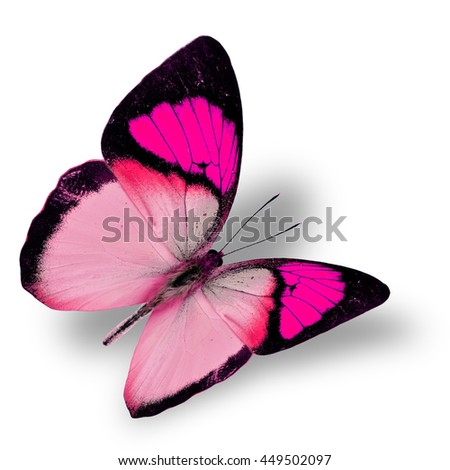 Beautiful flying bright pink butterfly, yellow orange tip butterfly in fancy color transparency with soft shadow beneath - stock photo