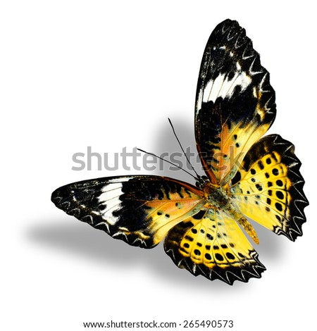Beautiful flying butterfly, Leopard Lacewing female on white background with nice shadow beneath - stock photo