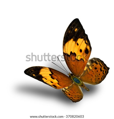 Beautiful flying butterfly, the Rustic butterfly (Cupha bilberg) in natural color profile with soft shadow beneath - stock photo