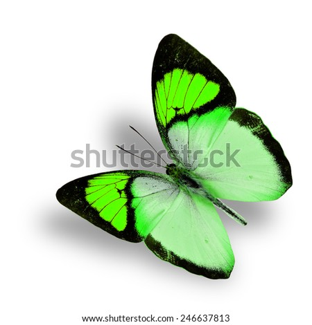 Beautiful flying fancy green butterfly (orange tip butterfly), with soft shadow beneath - stock photo