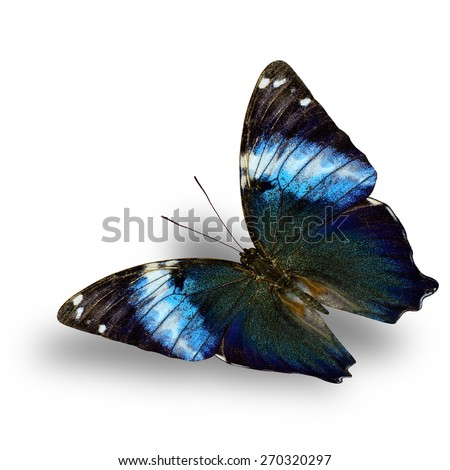 Beautiful Flying Glorious Begum butterfly with soft shadow beneath on white background - stock photo
