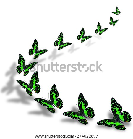 Beautiful flying green butterflies in a great series of taking off with nice shadow beneath - stock photo