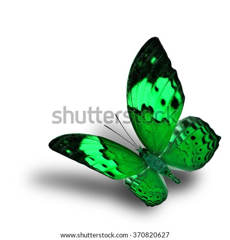 Beautiful flying green butterfly, the Rustic butterfly (Cupha bilberg) in fancy color profile with soft shadow beneath - stock photo
