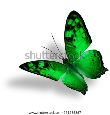 Beautiful flying green butterfly, The Vagrant Butterfly stretches its back wings profile in fancy color isolated on white bacground with soft shadow beneath - stock photo