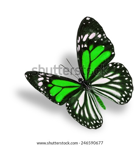 Beautiful flying green butterfly, white tiger in fancy color profile, with soft shadow beneath - stock photo