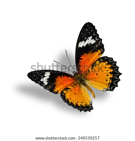 Beautiful Flying Leopard Lacewing Butterfly with soft shadow beneath on white background - stock photo