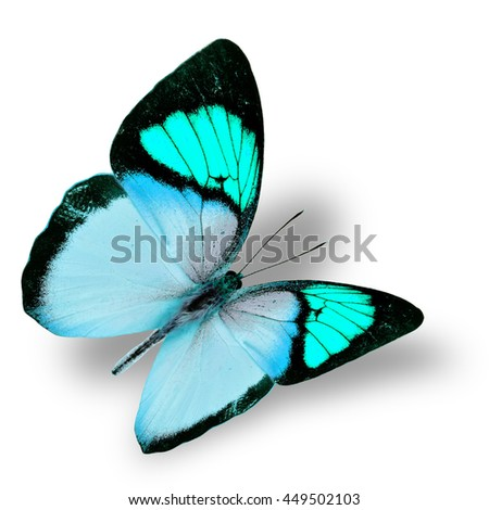 Beautiful flying light green butterfly, yellow orange tip butterfly in fancy color transparency with soft shadow beneath - stock photo