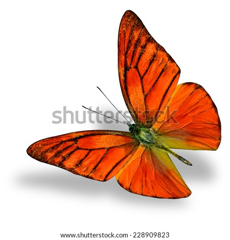 Beautiful Flying Orange Butterfly (Appais Nero) in fancy color profile in natural color isolated on white background with soft shadow beneath - stock photo