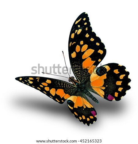 Beautiful flying orange butterfly, Lime butterfly (Papilio demoleus) in fancy color profile on white background with soft shadow beneath - stock photo