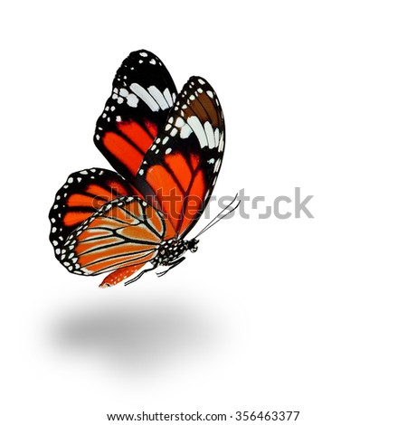 Beautiful flying orange butterfly with soft shadow beneath on white background - stock photo