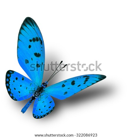 Beautiful flying pale blue butterfly with soft shadow beneath on white background - stock photo