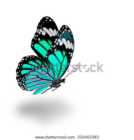 Beautiful flying pale green butterfly with soft shadow beneath on white background - stock photo
