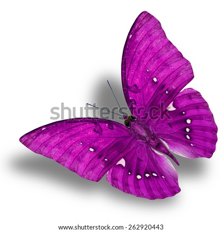 Beautiful Flying Pink Butterfly (Great Marquis) with nice shadow beneath isolated on white background - stock photo