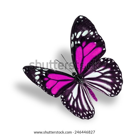 Beautiful flying pink butterfly, white tiger in fancy color profile, with soft shadow beneath - stock photo
