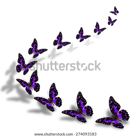 Beautiful flying purple butterflies in a great series of taking off with nice shadow beneath - stock photo