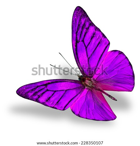 Beautiful Flying Purple butterfly (Appais Nero) in fancy color profile in natural color isolated on white background with soft shadow beneath - stock photo