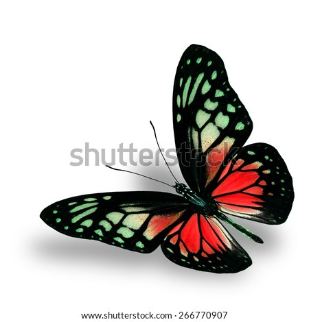 Beautiful Flying Red Butterfly on white background with soft shadow beneath - stock photo