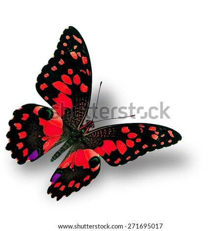 Beautiful flying red butterfly, the colorful Lime butterfly in fancy color profile - stock photo