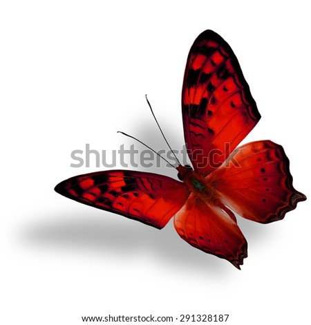 Beautiful flying red butterfly, The Vagrant Butterfly stretches its back wings profile in fancy color isolated on white bacground with soft shadow beneath - stock photo