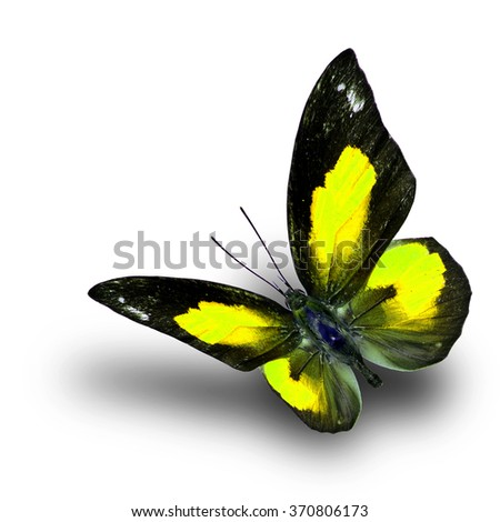 Beautiful flying yellow butterfly, the Bright Sunbeam or Malayan Sunbeam butterfly in fancy color with shadow beneath on white background - stock photo