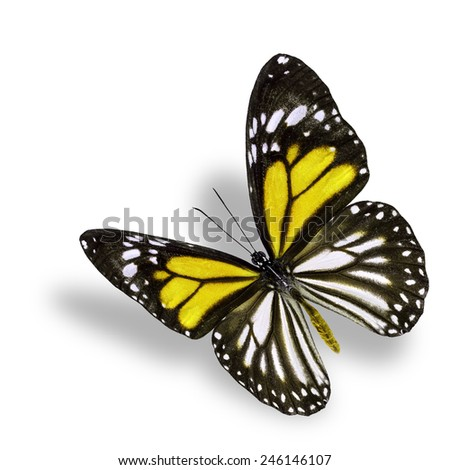 Beautiful flying yellow butterfly, white tiger in fancy color profile, with soft shadow beneath - stock photo