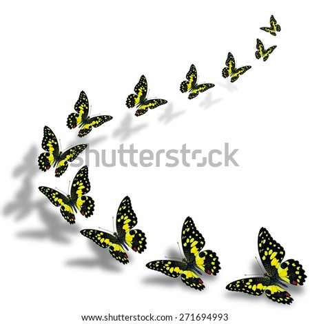 Beautiful flying yellow lime butterfly in a great series of taking off with nice shadow beneath - stock photo