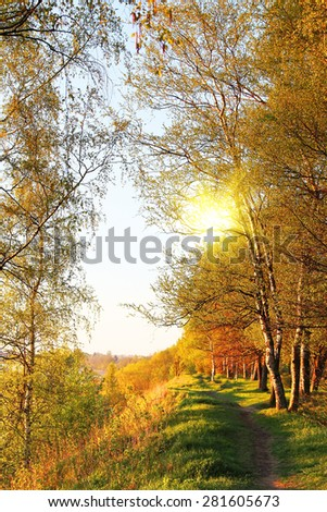 beautiful  forest at sunrise - stock photo