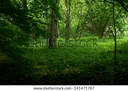 beautiful forest floor, forest clearing - stock photo