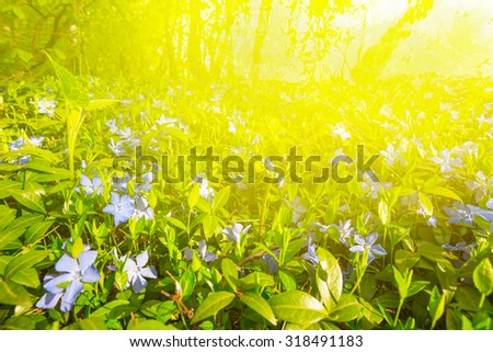 beautiful forest glade in a rays of sun - stock photo