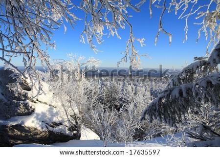 Beautiful forest landscape - stock photo