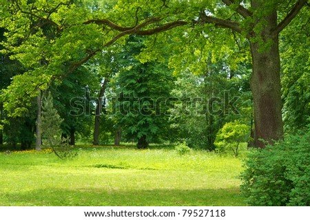 Beautiful forest landscape - stock photo