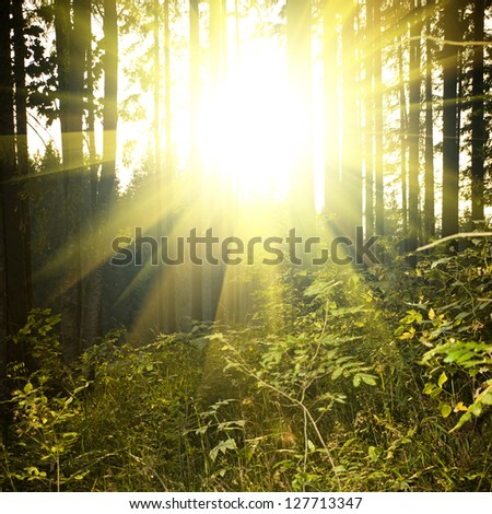 beautiful forest landscape at sunset - stock photo
