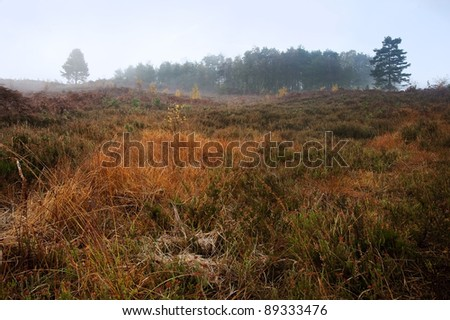 Beautiful forest landscape of foggy misty forest in Autumn Fall - stock photo
