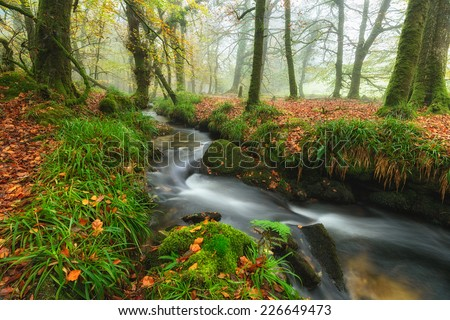 Beautiful forest stream flowing through misty Autumn trees at Golitha Falls on the edge of Bodmin Moor in Cornwall - stock photo
