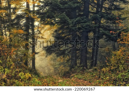 Beautiful forest view. Scenic landscape of autumn wood. - stock photo