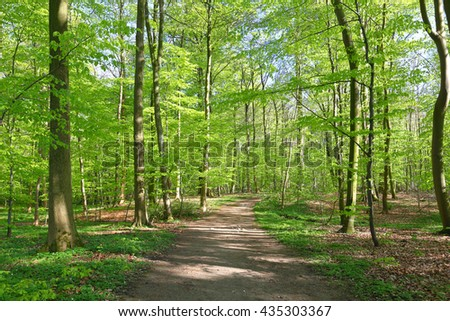 Beautiful forrest in the morning sun in spring - stock photo