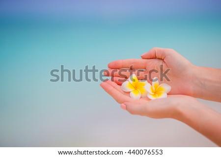 Beautiful frangipani flowers background turquoise sea on white beach - stock photo