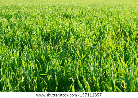 Beautiful fresh grass - stock photo