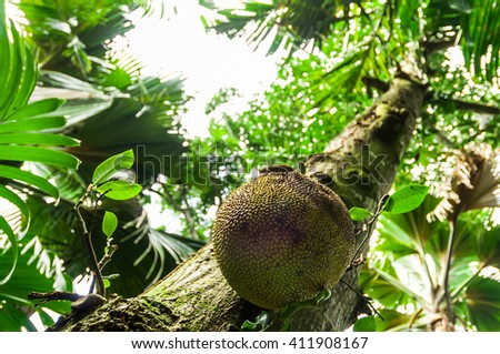 Beautiful fresh green dense tropical jungle garden, Seychelles Islands - stock photo