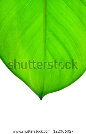 Beautiful fresh green leaf close up - stock photo
