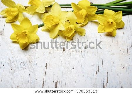 Beautiful fresh narcissus on white wooden table - stock photo