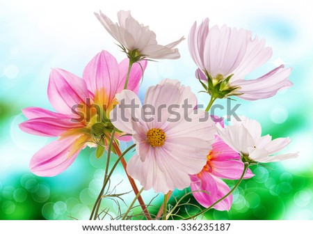 Beautiful  fresh pink garden flowers on abstract spring nature background - stock photo