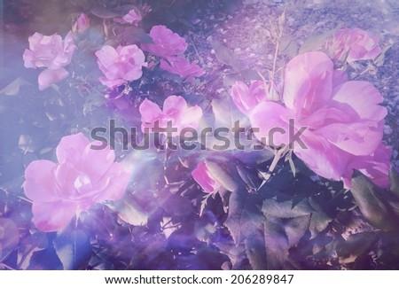 Beautiful fresh purple flowers field - stock photo
