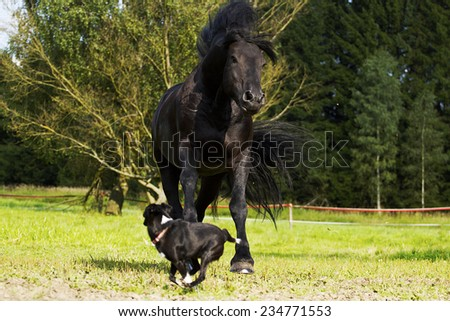beautiful friesian horse stallion in autumn nature with dog - stock photo