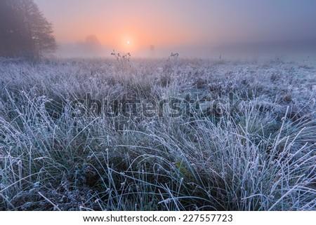 beautiful frosty morning landscape.  - stock photo