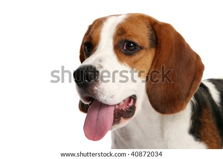 beautiful funy dogs on white - stock photo