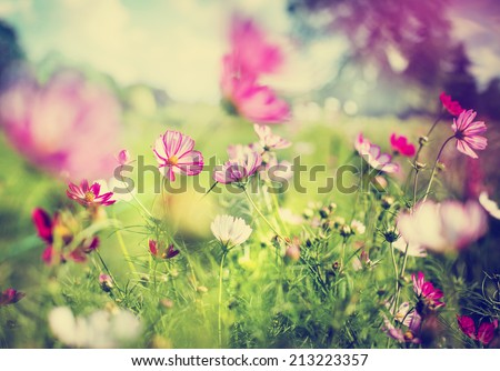 beautiful garden flowers - stock photo